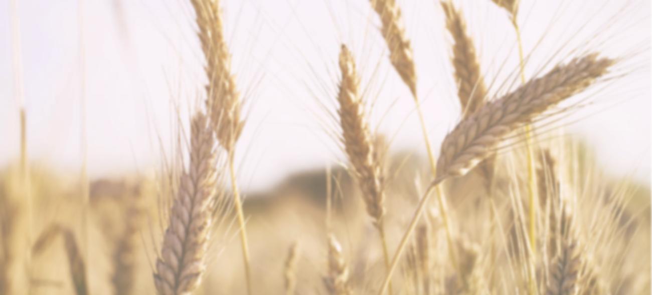 ТОП-20 экспортёров пшеницы