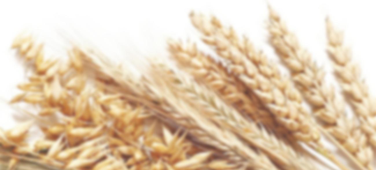 Российский рынок зерна 2020